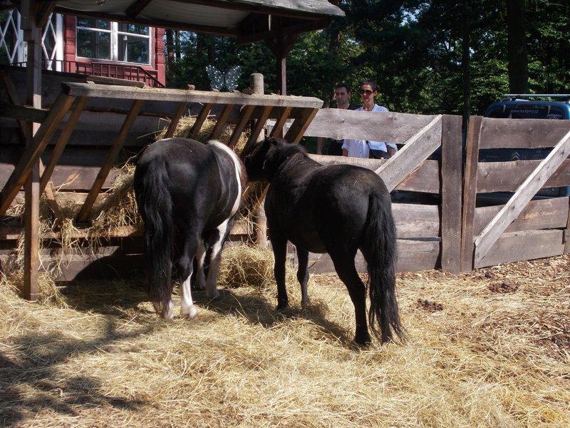 Diana's mini-farm.