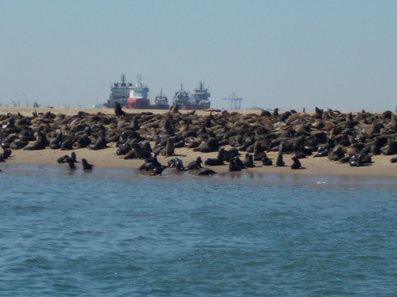 And even more ships behind the seal colony.
