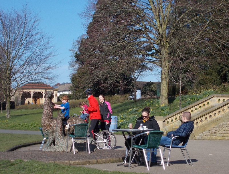 Alpacas in Roberts Park.
