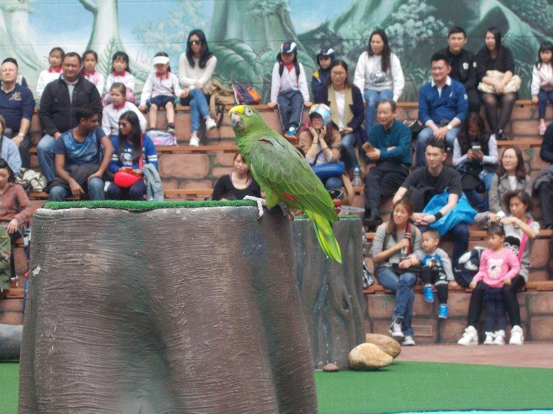 Bird Show.