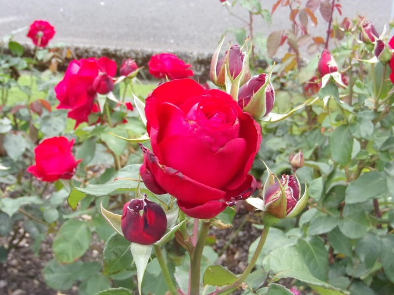 Flowers in Esplanade Park.