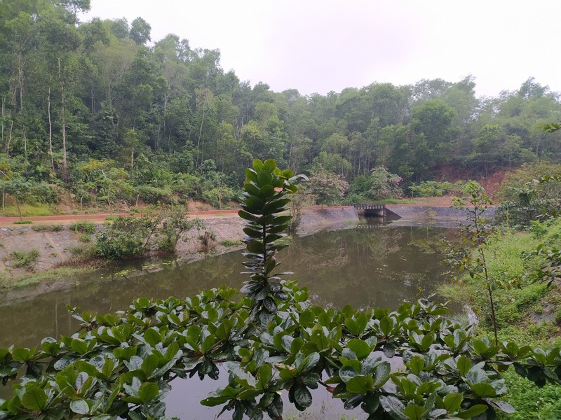 Jungle Scenery.