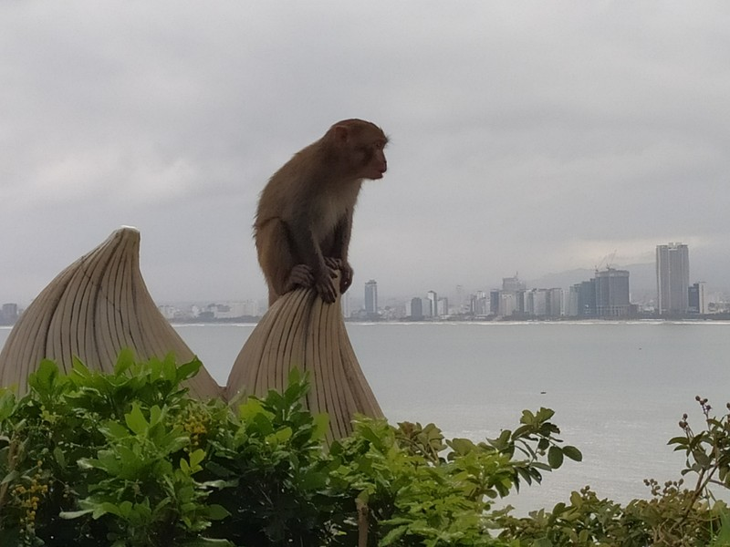 Monkeys on Monkey Mountain.