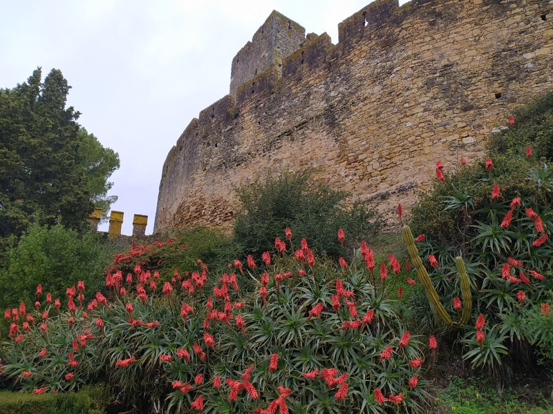 Flowers at the castle walls.