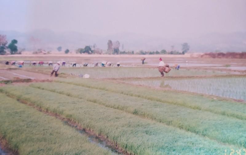 Tending their crops.
