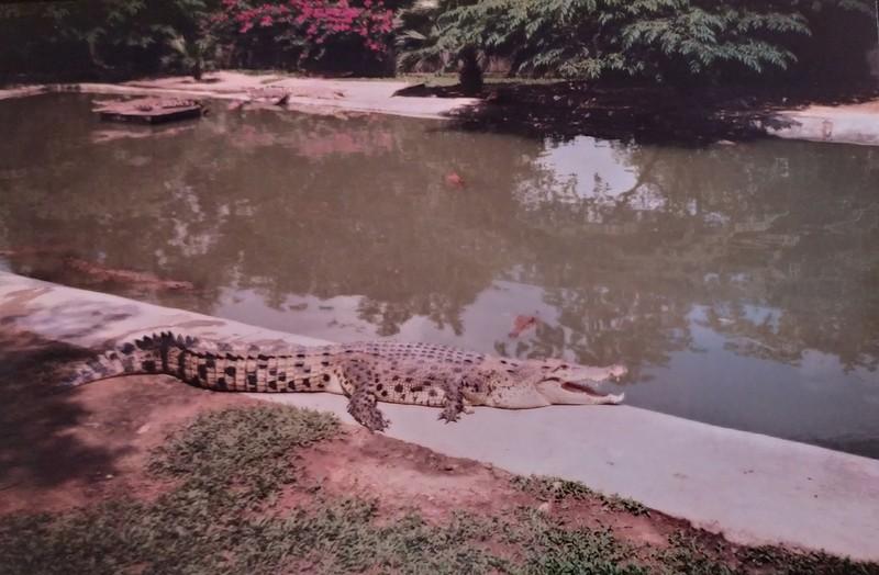 Langkawi Crocodile Farm.