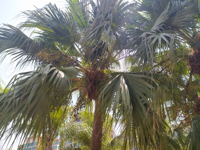 Palm trees in the park.