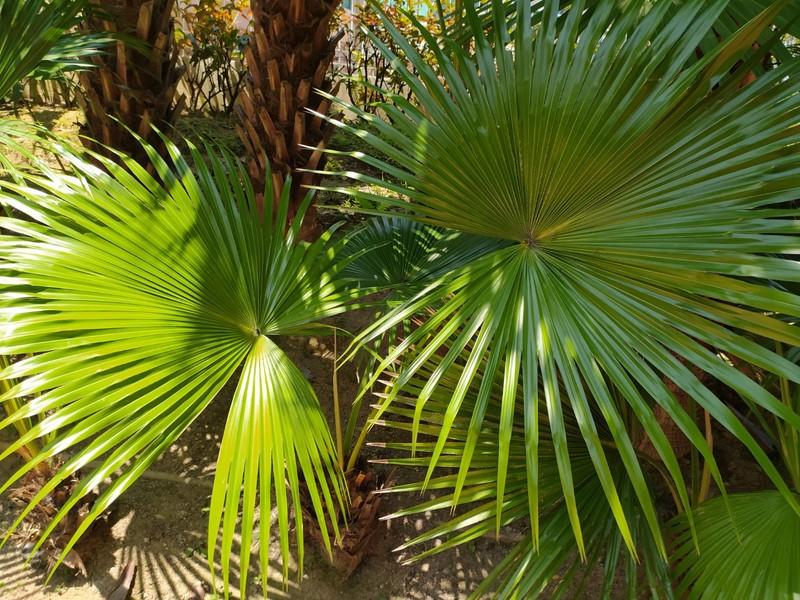Leafy Plants.