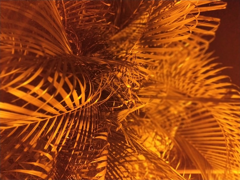 Illuminated plants.