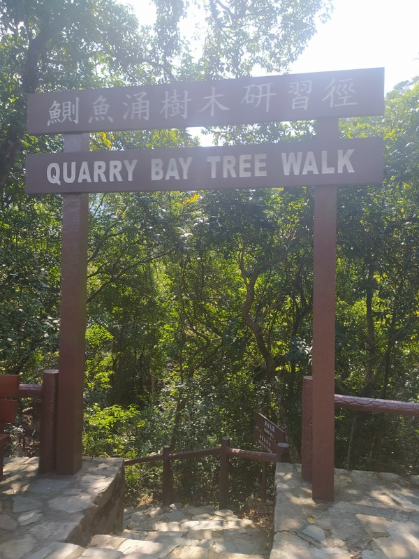 Quarry Bay Tree Walk.