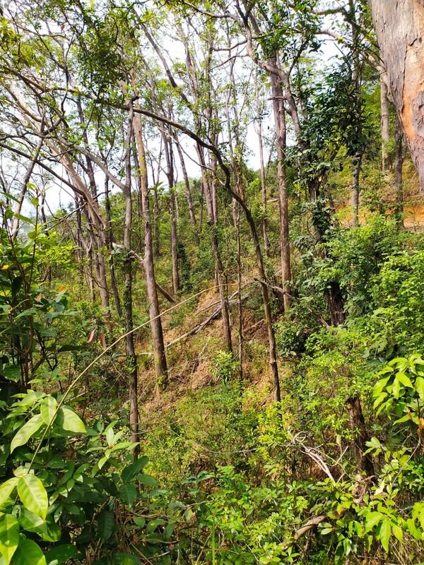 Woods on Smugglers' Ridge.