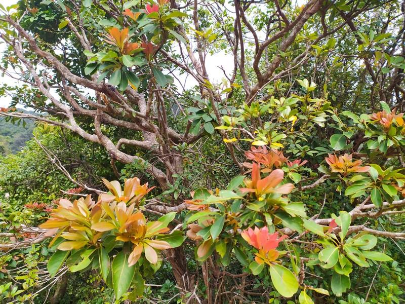 Colourful Vegetation.