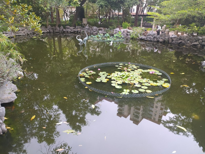 The new reflected in a pond.