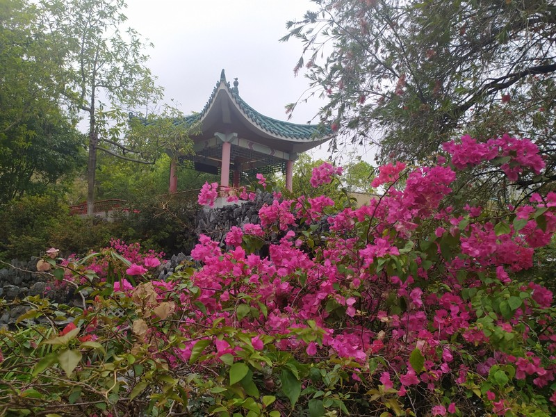 Pagoda and Bouganvilia.