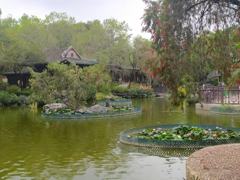 Flower filled pond.