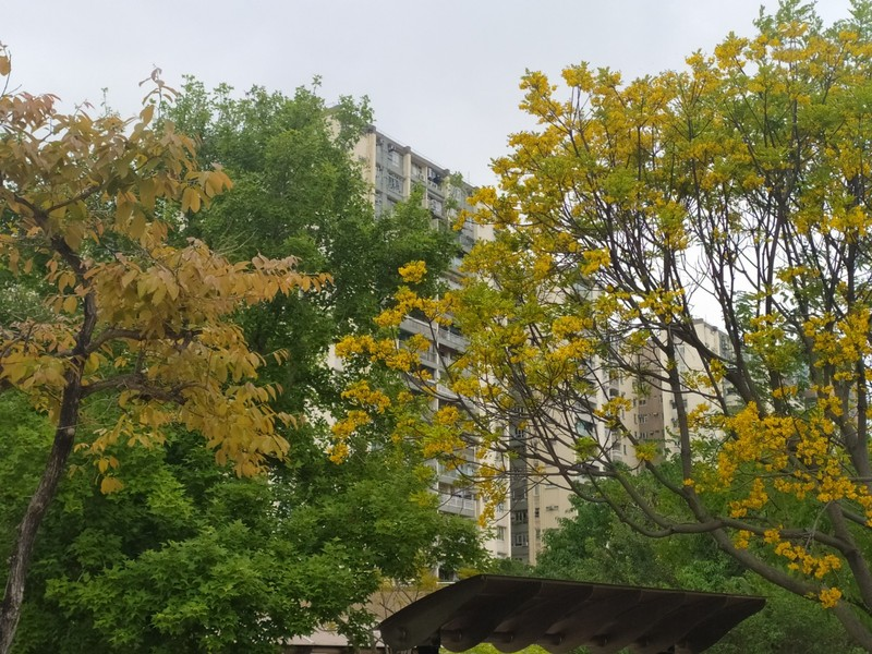 And everything was all yellow.