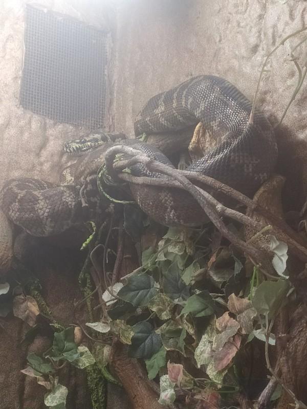 Python.
