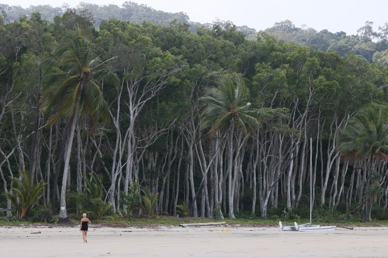 Cape Tribulation (10)