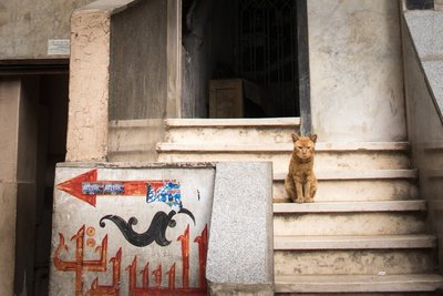 Street cats in Cairo