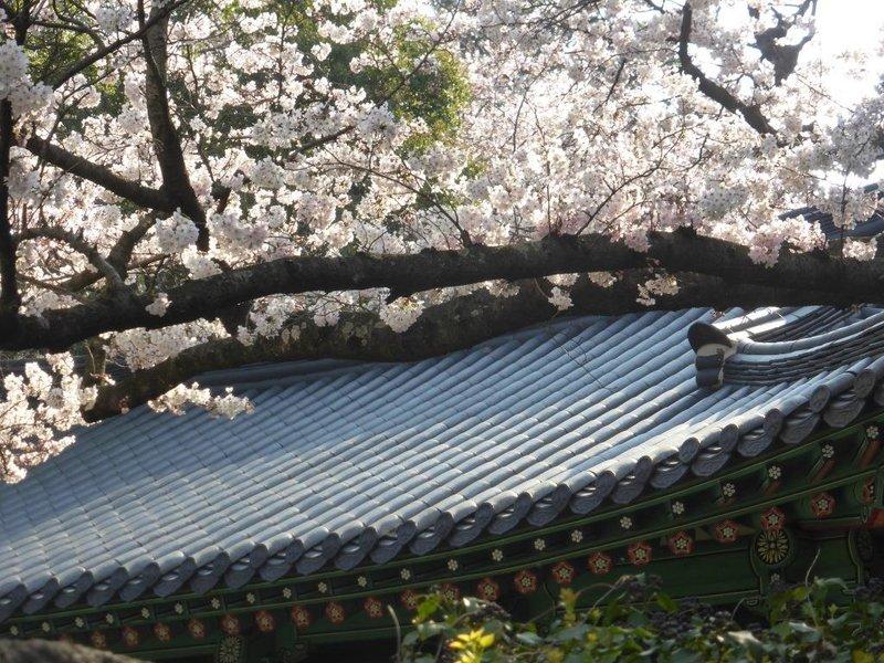 flashback to Jeju: Dolhareubang