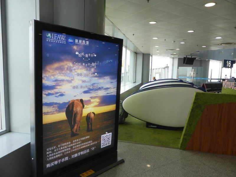 advertisements inform about the penalties for importing ivory