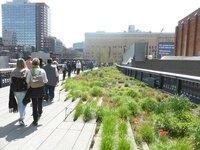 The High Line: grassland