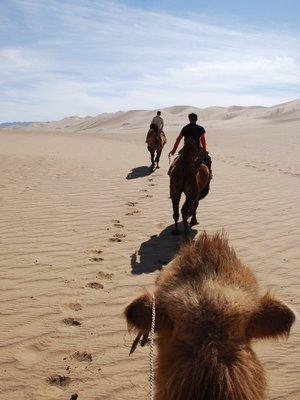 Gobi - Camel ride