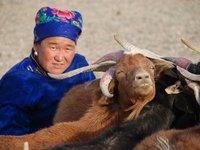 Gobi - Milking goats