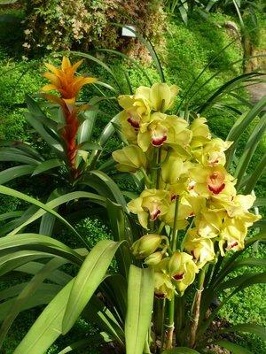 Egy kis orchideás kompozícijó