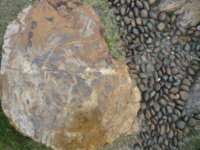 a foszília keresztmetszete