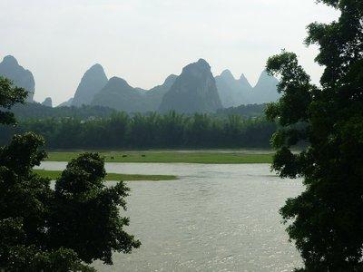 a folyó legelésző vizibivalyokkal