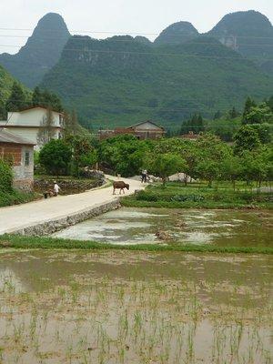 egy kis rizsföld