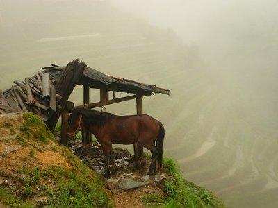 a ló és a misztikum