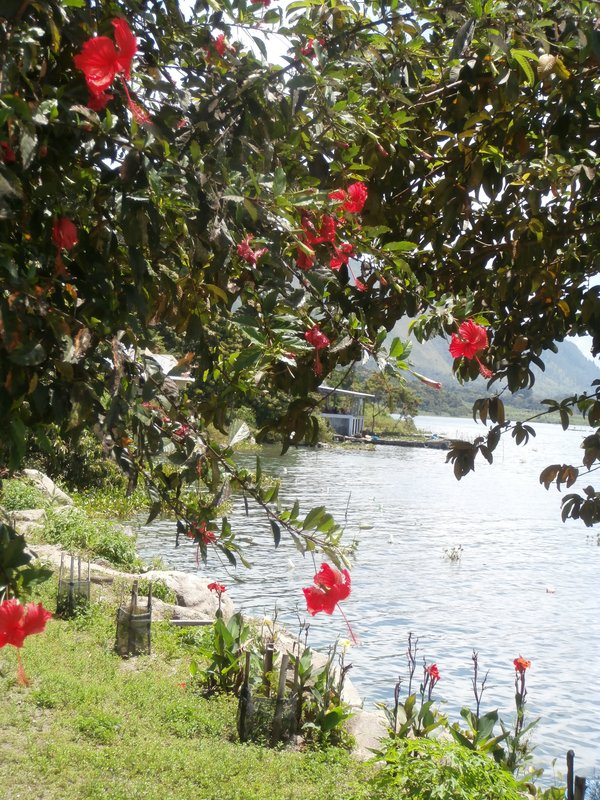 large_Danau_toba_with_Hibiscus.jpg
