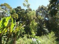 Gerden tree belt, at village Saparua