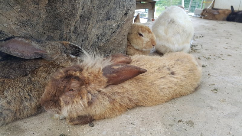 Furry rabbit