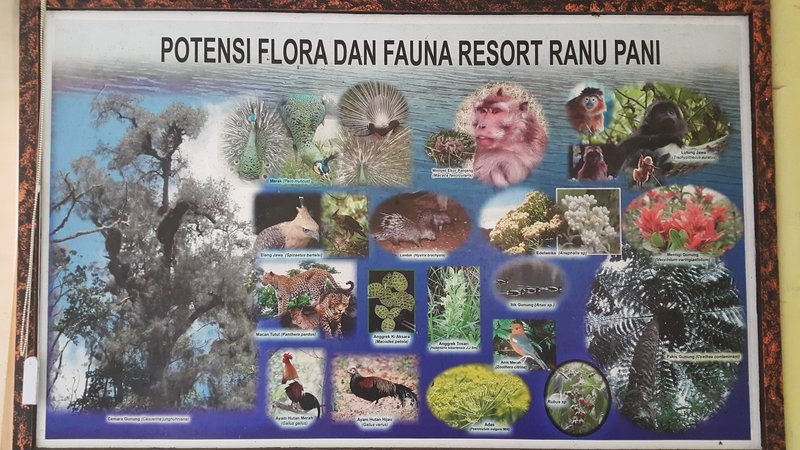 Flora and fauna at Semeru