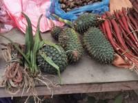 Wild pineapples