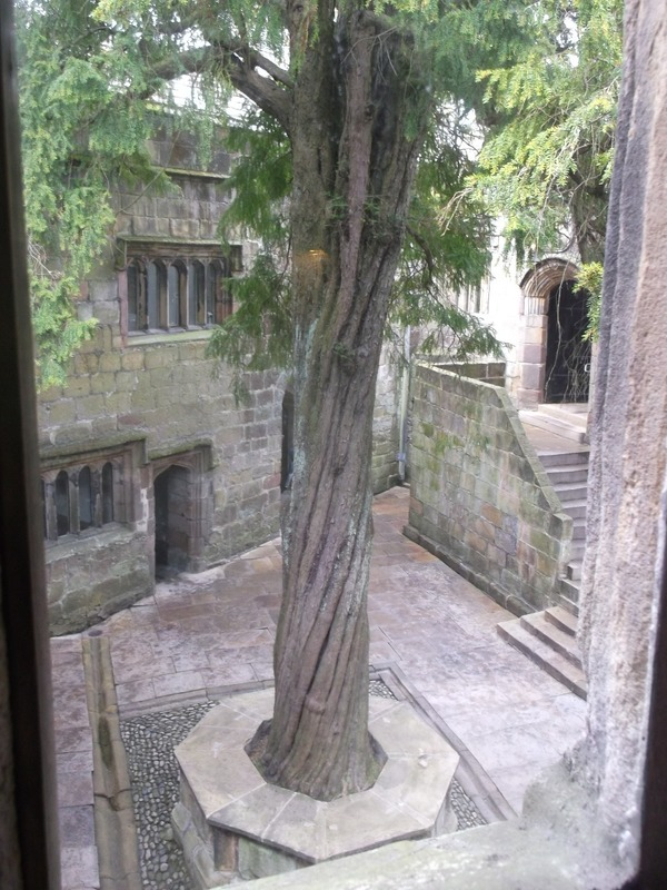 Courtyard Yew tree planted in 1659