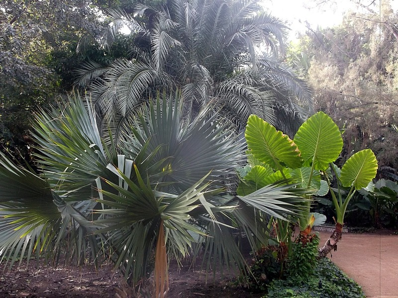 many different palms