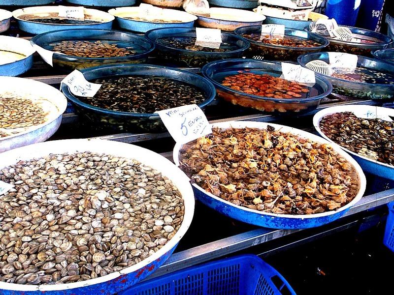 all kinds of shellfish