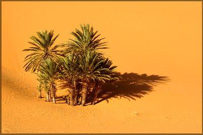 29 Palms...