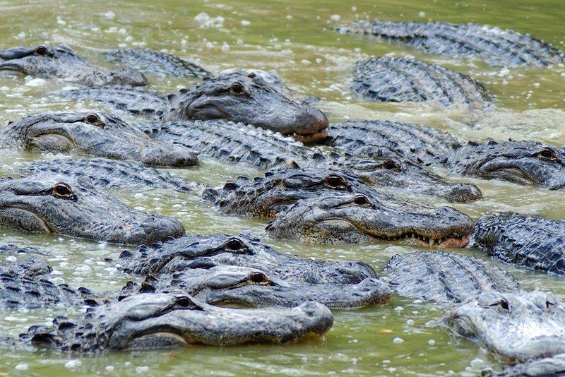 Everglades Gatorade