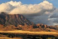 Wyoming roadkill