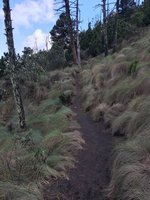 Enticing path
