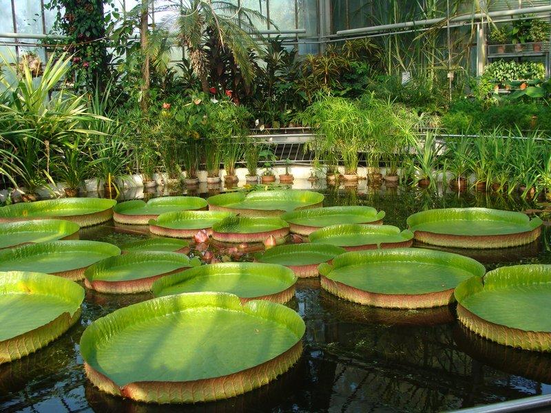 Cluj Botanical Garden