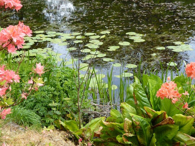 Bargany Gardens