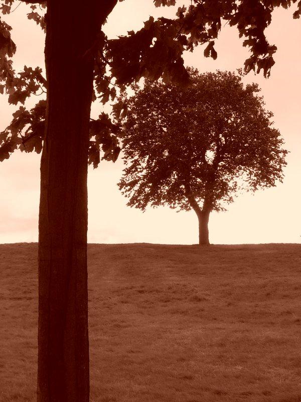 Trees : Edinburgh