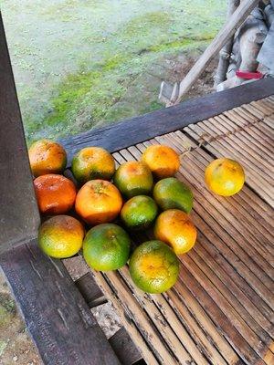 Kalinga oranges
