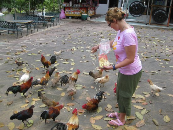 Me feeding the chickens